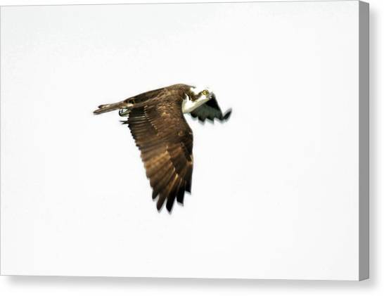 Phantom Of The Osprey Canvas Print