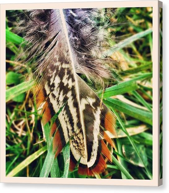 Pheasants Canvas Print - Pheasant Feather! #feather #pheasant by Robert Campbell