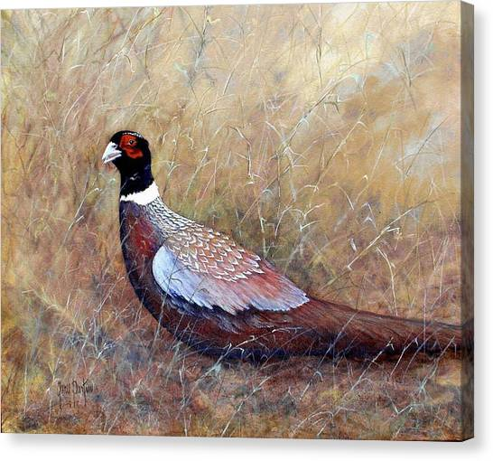 Pheasant In The Grass Canvas Print