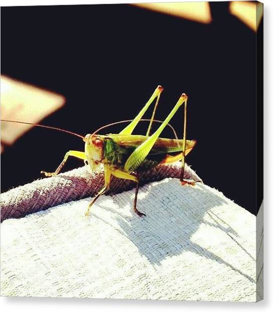 Grasshoppers Canvas Print - #photooftheday #instaprints #insects by Nicole Plows