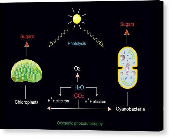 Photosynthesis, Artwork Canvas Print by Francis Leroy, Biocosmos