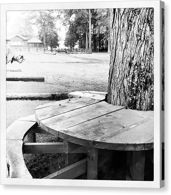 South Carolina Canvas Print - Picnic Table  by Brian Harris