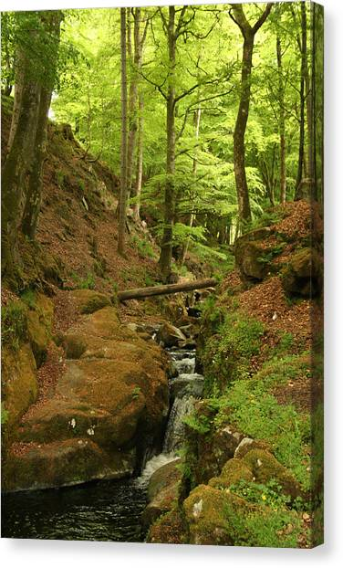 Picturesque Creek Canvas Print