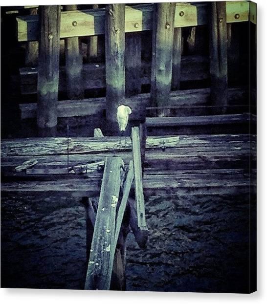Herons Canvas Print - #pier #bird #heron #standing by Arkady Sandler