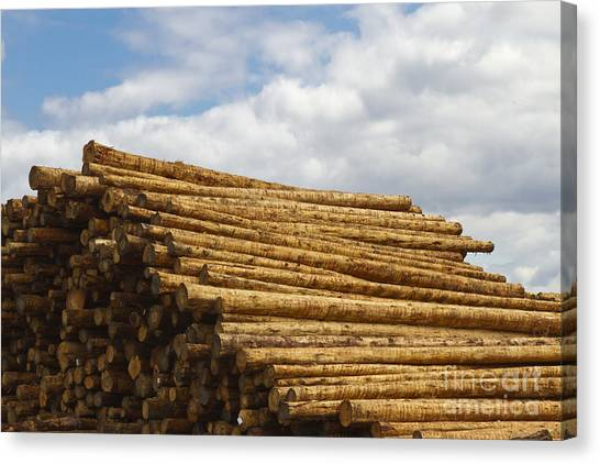 Portland Timbers Canvas Print - Pile Of Fresh Timber by David Buffington