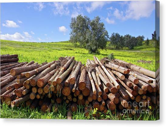Axes Canvas Print - Pile Of Trunks by Carlos Caetano