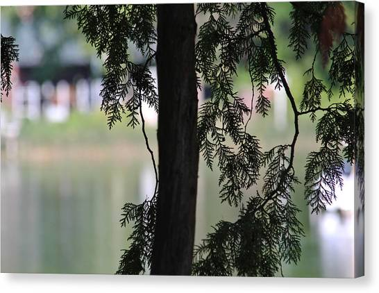 Pine Branch Over The River Canvas Print by Janet Mcconnell