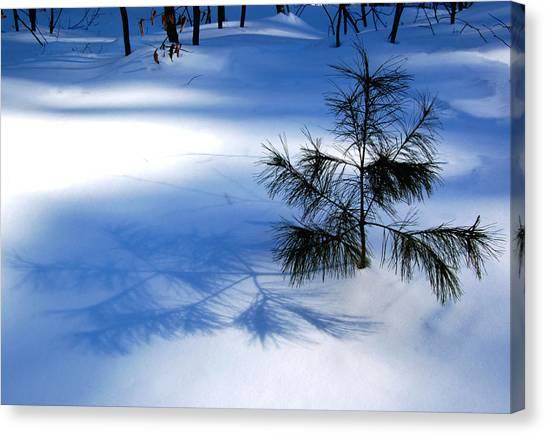 Pine Shadow Canvas Print
