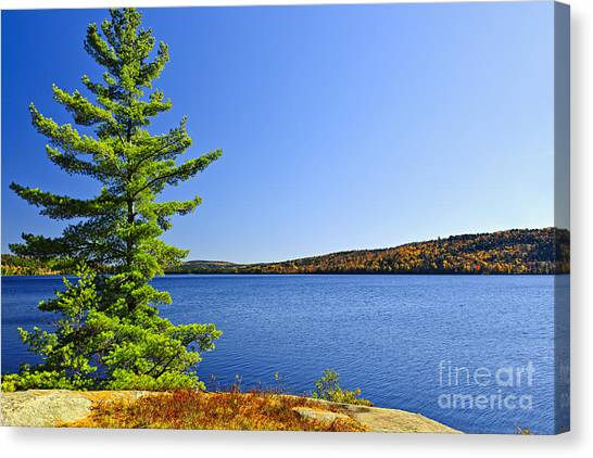 Algonquin Park Canvas Print - Pine Tree At Lake Shore by Elena Elisseeva