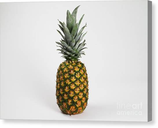 Pineapples Canvas Print - Pineapple by Photo Researchers, Inc.
