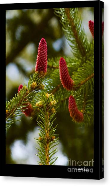 Pinecone Blooms Canvas Print