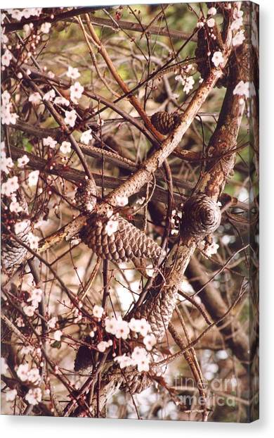 Pinecones And Cherry Blossoms Canvas Print