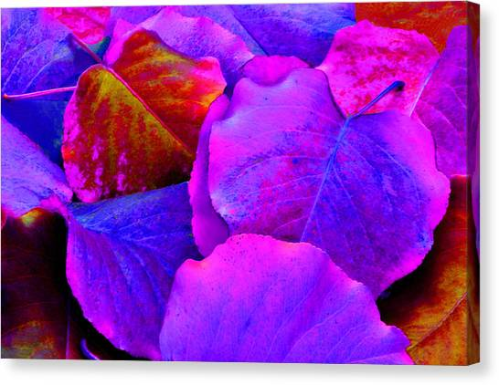 Pink And Purple Leaves Canvas Print by Sheila Kay McIntyre