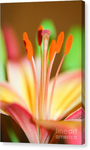 Pink And Yellow Lily 4 Canvas Print by Melissa Haley