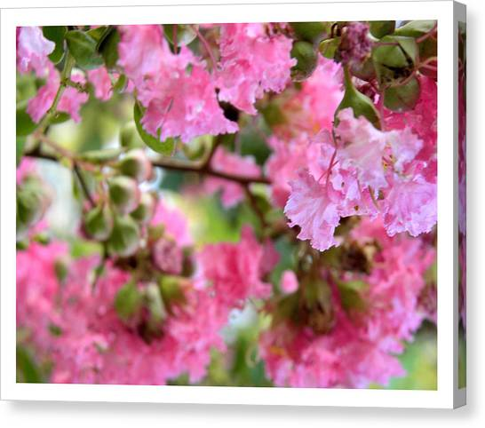 Pink Blooms Canvas Print
