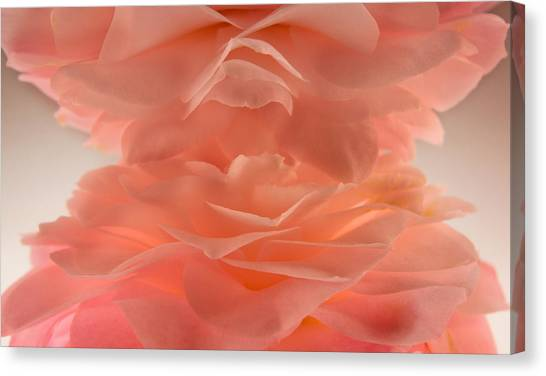 Pink Cloud Canvas Print