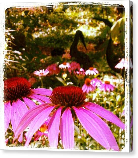 Droid Canvas Print - #pink #coneflower #echinacea #bloom by Carla From Central Va  Usa