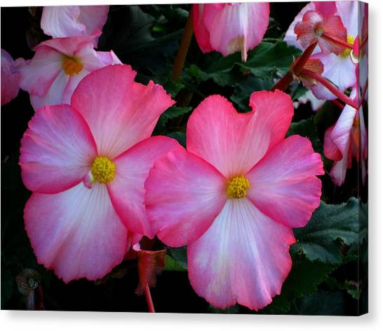 Pink Flowers Canvas Print by Kathy Long