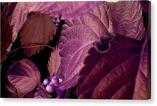Pink Leaves Canvas Print by Juliana  Blessington