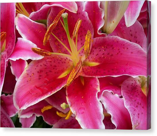 Pink Lily With Water Droplets Canvas Print