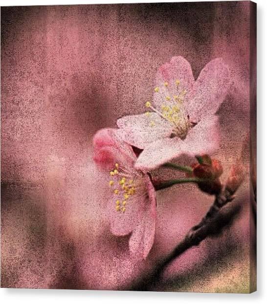 Pink Canvas Print - Pink Love by Joel Lopez