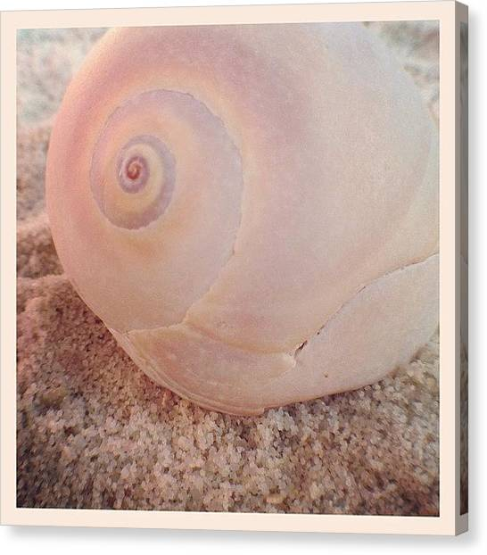 Seashells Canvas Print - Pink Nautilus by Beach Bum Chix