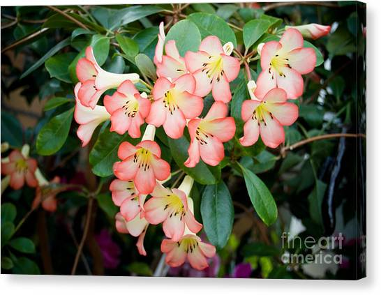 Pink On Green Canvas Print