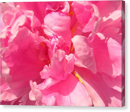 Pink Peony Canvas Print by Tina Ann Byers
