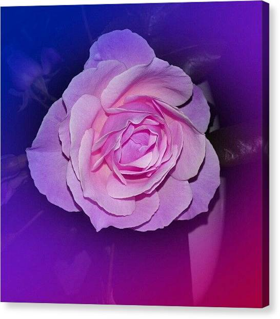 Florals Canvas Print - #pink #rose #flower #beautiful #cute by A I