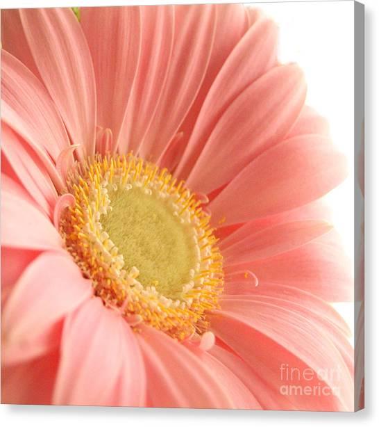 Pink Sherbert Blossom Canvas Print