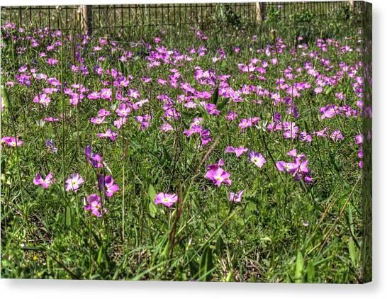 Pink Spring Flowers Canvas Print