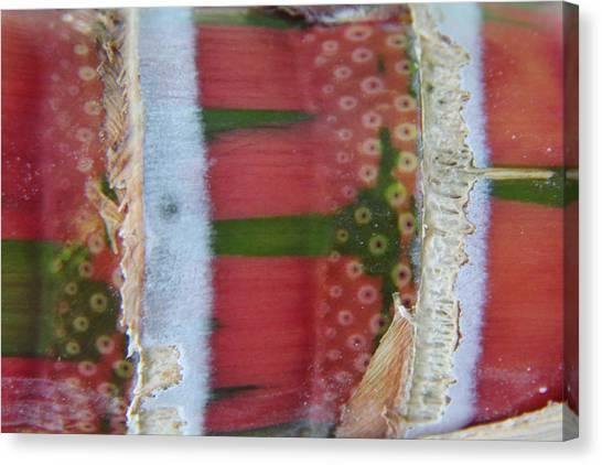 Pink Sugarcane 3 Canvas Print