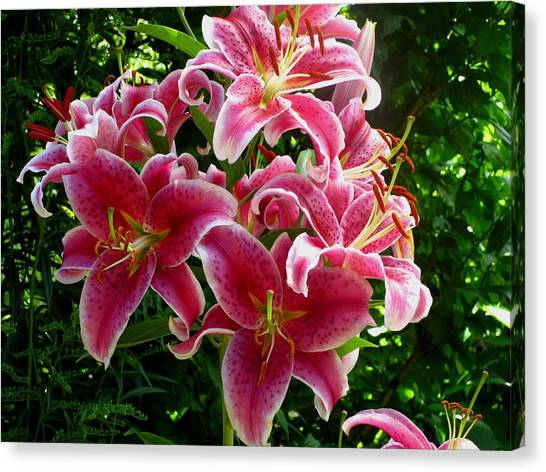 Pink Tiger Lilies Canvas Print by Kathy Long