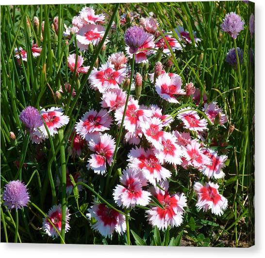 Pinks In The Clover Grass Canvas Print by Jeanette Oberholtzer