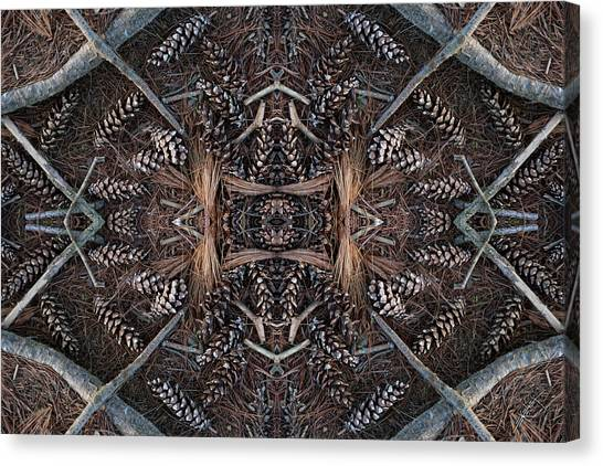 Pinus Strobus Canvas Print by Ed Kelley