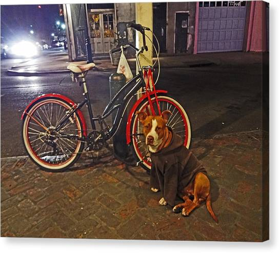Pit Bull In A Hoodie In The French Quarter Of New Orleans Canvas Print