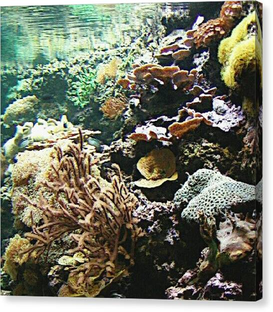 Aquariums Canvas Print - #pittsbugh  #efranz13  #underwater by Elisa Franzetta