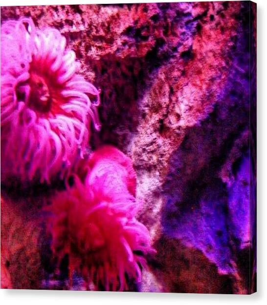 Aquariums Canvas Print - #pittsbugh  #efranz13  #water #ocean by Elisa Franzetta