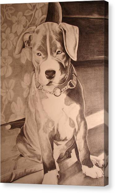Pitty Pet Portrait Canvas Print by Yvonne Scott