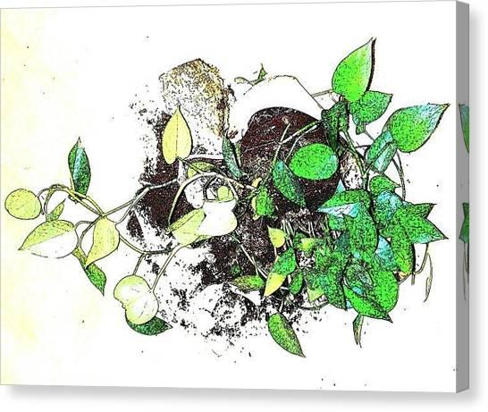 Plant Falls Canvas Print