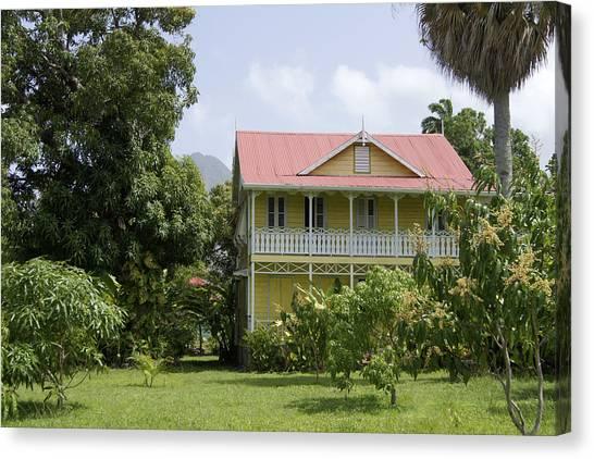 Mango Tree Canvas Print - Plantation Home by Daniel Jean-Baptiste