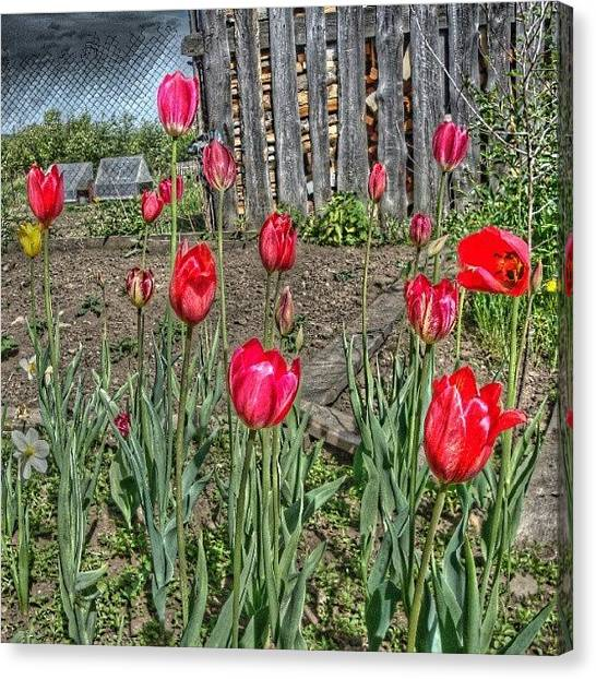 Russia Canvas Print - Plants In The Village Polunochnoe by Igor Che 💎