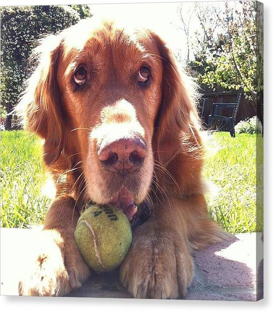 Tennis Ball Canvas Print - Play With Me by Crystal Peterson