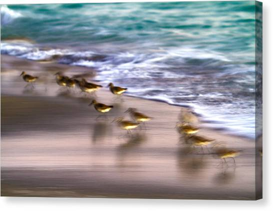 Sandpipers Canvas Print - Playing Pipers by Betsy Knapp