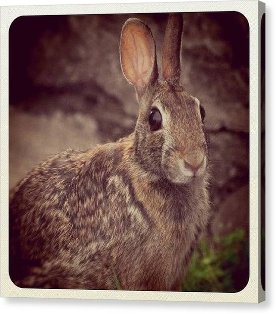 Rabbits Canvas Print - Please Don't Eat Me by Melinda Wolverson
