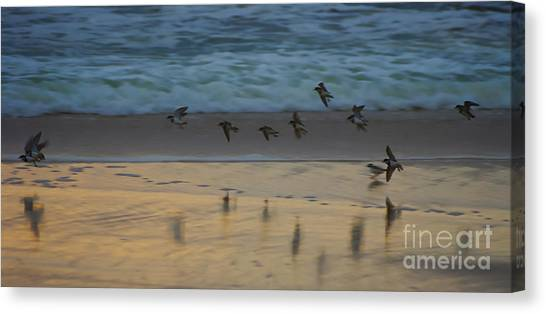 Plovers At Play On A Stormy Morning Canvas Print
