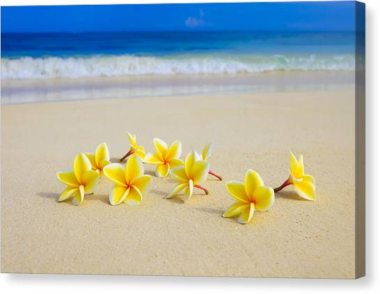 Plumerias On Beach II Canvas Print
