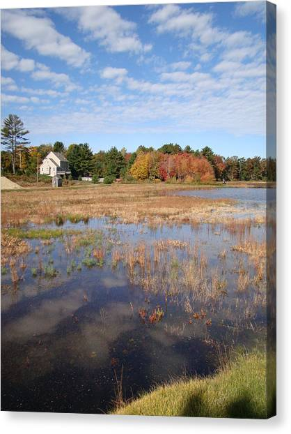 Plymouth Cranberry Bog Canvas Print by Mark Haley