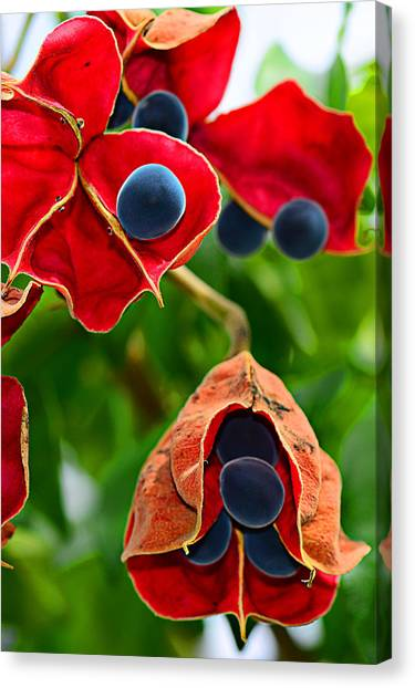 Pods Canvas Print by Michelle Armstrong