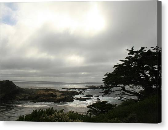 Point Lobos View Canvas Print by Suzanne Lorenz